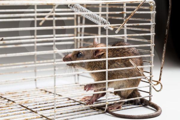 уничтожение мышей цена