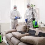 уничтожение блох в квартире в москве