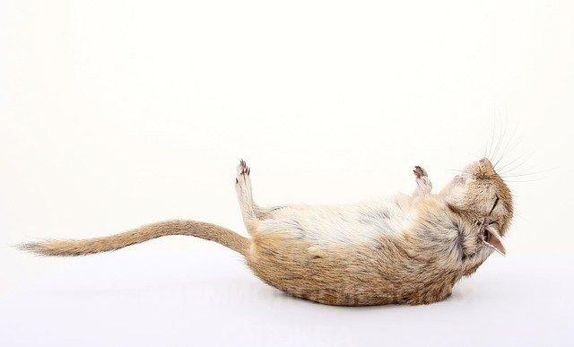 уничтожение крыс цена