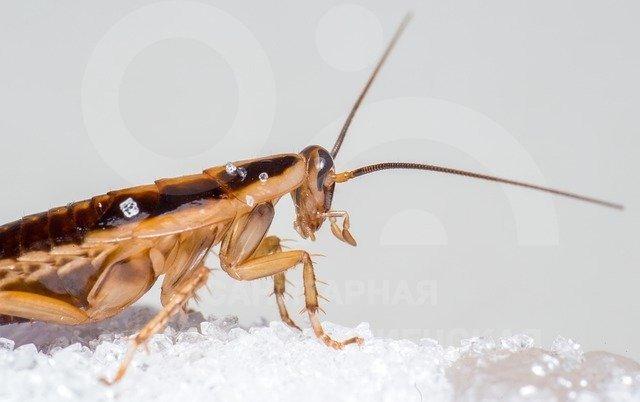 обработка квартиры от тараканов заказать