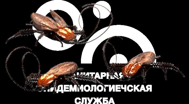 санобработка квартиры от тараканов сколько стоит