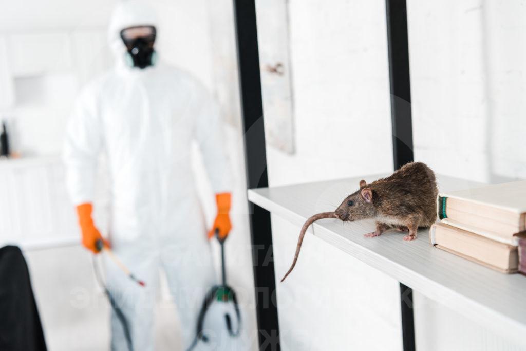 какие животные опасны для человеческого здоровья