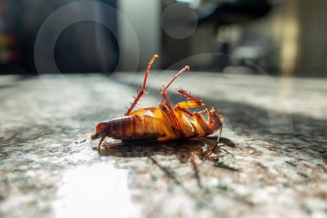уничтожить насекомых в хранилище
